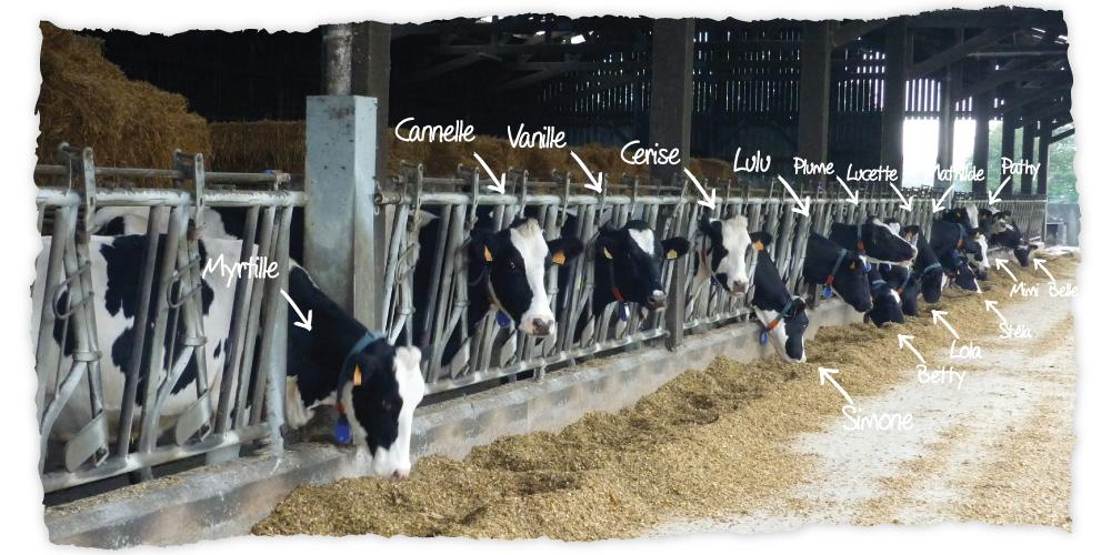 LE CRAULOIS - Mon fermier préféré - Ferme laitière de la Craulée